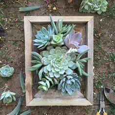 Jardín de suculentas vertical por VerticalFlora en Etsy