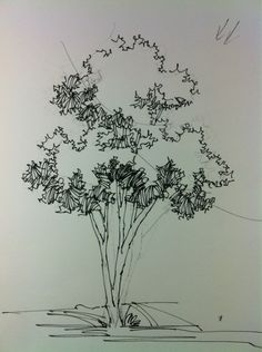 Architecture Drawing Of Trees pictures of trees drawing | jmariemi: how to draw a tree | pen