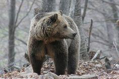 GR4YOU: Τις πρώτες ανοιξιάτικες βόλτες κάνουν οι αρκούδες ...