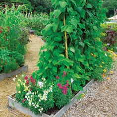 Wise Pairings: Best Flowers to Plant with Vegetables - Organic Gardening - MOTHER EARTH NEWS