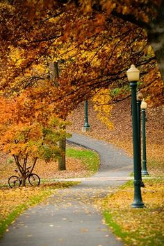 Celebrating Fall Colors: 20 Autumn Landscape PhotosYou can find Landscape photos and more on our website. Autumn Scenery, Fall Pictures, Autumn Photos, Fall Images, Seasons Of The Year, All Nature, Autumn Nature, Pathways, Autumn Leaves