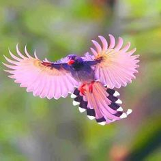 Pink Bird Visit our Page -►Wildlife and Nature Pictures ◄- For more photos Pretty Birds, Beautiful Birds, Animals Beautiful, Cute Animals, Animals Amazing, Pretty Animals, Beautiful Songs, Simply Beautiful, Kinds Of Birds
