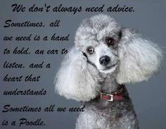 ":-) ""We don't always need advice. Sometimes, all we need is a hand to hold, an ear to listen, and a heart that understands. Sometimes all we need is a Poodle""."