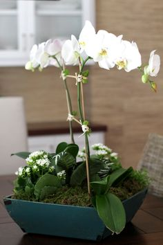 orchid-fern arrangement