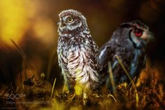 friends by ManfredKarisch #animals #animal #pet #pets #animales #animallovers #photooftheday #amazing #picoftheday