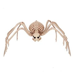 Fantasy Bone Skeleton Animal 100% Plastic Animal Skeleton Bones for Horror Halloween Decoration