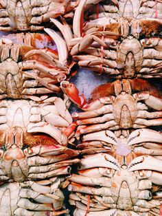 Crabs @ the Farmers Market in Seattle