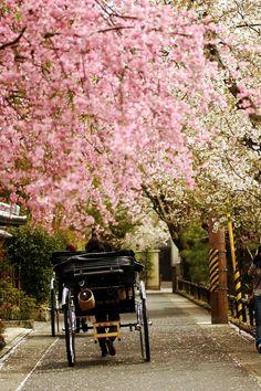 kyoto- Japão