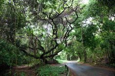 The Rainforest.St Croix, US Virgin Islands