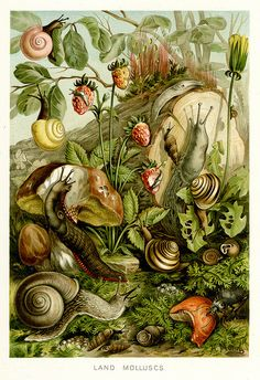 Snails and slugs, vintage illustration 1893 Source The royal natural history… Art And Illustration, Nature Illustrations, Vintage Illustrations, Impressions Botaniques, Snail Art, Painting Prints, Art Prints, Painting Art, Watercolor Painting