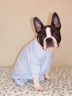Lol you can guarantee our new little Cheyenne will be in onesies! <3 BEST BREED EVER