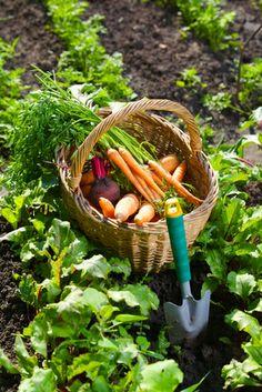 ¿Por qué están tan buenos los productos ecológicos? http://www.allegraservices.com/blog/por-que-estan-tan-buenos-los-productos-ecologicos/