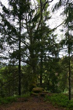 jattadalen oglunda naturrservat
