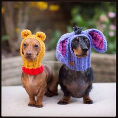 (Winnie the Pooh or Eeyore dog hat. Who doesn't enjoy to dress up their dog? Now you can with this fun Disney inspired dog hat/snood :). Weenie Dogs, Dachshund Puppies, Dachshund Love, Cute Puppies, Cute Dogs, Doggies, Daschund, Cute Baby Animals, Funny Animals