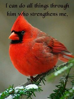 My love is so strong and my hope in a miracle that I post a Cardinal. That says a lot about my prayers . That says a lot about how much I love that someone special and our lil one