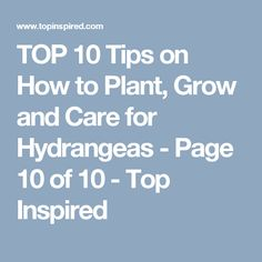 TOP 10 Tips on How to Plant, Grow and Care for Hydrangeas - Page 10 of 10 - Top Inspired Garden Shrubs, Landscaping Plants, Shade Garden, Landscaping Ideas, Garden Plants, Easy Garden, Summer Garden, Garden Ideas, Garden Inspiration