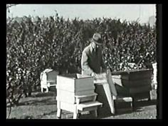 A fascinating look at beekeeping in the 1930's. (This is part 1 of 5.)