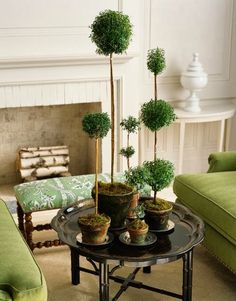 Myrtle topiary trees - too cute! Potted Plants, Indoor Plants, Indoor Gardening, Estilo Floral, White Mantel, Fireplace Mantels, Fireplaces, Fake Fireplace, Fireplace Furniture