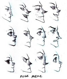 Different Kinds of Nose through Side view