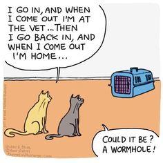 Top 30 Funny Memes Animals And Pets : Freezer Fox Cat Jokes, Funny Animal Memes, Funny Animal Pictures, Funny Animals, Cats Humor, Animals And Pets, Funny Cartoons, Funny Comics, Cat Comics