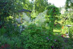 My cottage garden Garden Cottage, Green Gables, Aquarium, Plants, House, Goldfish Bowl, Home, Aquarium Fish Tank, Plant
