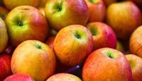 HEALTHY: how to sub applesauce for oil in baking recipes