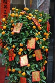 Oranges and Lucky Red Envelopes on a Money Tree