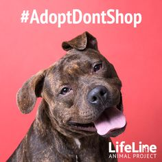 We believe adopting a pet instead of purchasing from a breeder or pet shop is, quite simply, the right thing to do. Much like holding the door open for others or helping a friend in need.
