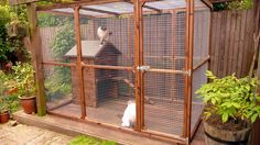 cat run with cat house-bedfordshire