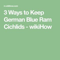 3 Ways to Keep German Blue Ram Cichlids - wikiHow