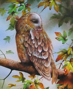 """Tawny Owl in FieldMaple"" by David Finney - Wildlife Artist & Illustrator"