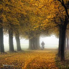 autumn delight | herfst genot Autumn Leaves, Country Roads, Fall Leaves, Autumn Leaf Color