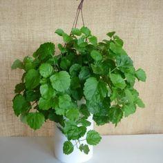 1000 images about plantas de interior on pinterest - Plantas para exterior ...