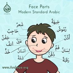 Learn Face Parts in Arabic Arabic Names, Arabic Words, Learning Activities, Kids Learning, Modern Standard Arabic, Learn Arabic Online, Arabic Alphabet For Kids, Quran Arabic, Arabic Lessons