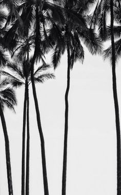 Palm tree wallpaper.