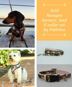 Stunning matching dog harness, lead and collar set by Pebblina. Featuring a unique hexagon pattern with a touch of gold. Dog Facts, Hexagon Pattern, Online Pet Supplies, Touch Of Gold, Dog Harness, Best Dogs, Pets, Unique, Animals And Pets