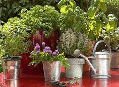 www.rustica.fr - Carte de France des jardins de simples et plantes aromatiques