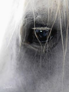 In their eyes shine stars of wisdom and courage to guide men to the heavens....Jodie Mitchell