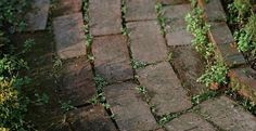 green leaves and bits of moss between your patio tiles can be so annoying. Organic Gardening, Gardening Tips, Balcony Gardening, Gardening Gloves, Garden Solutions, Patio Tiles, 1000 Life Hacks, Weed Killer, Paving Stones