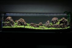 First Time Aquascape - 12 gallon long - Mountainscape