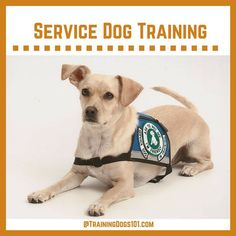 SPECIAL SERIES: Training Your Own PTSD Service Dog by Dr. Joan ...