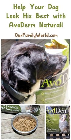 Got an itchy dog with lackluster fur? See how AvoDerm Natural gets my pooch…