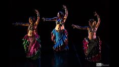 WildCard BellyDance Collective at Stardust Follies 2019 Gypsy Caravan, Dance Videos, Drills, Bring It On, Collection, Flamingo, Gypsy Wagon, Drill