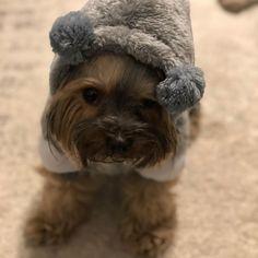 """Gefällt 0 Mal, 1 Kommentare - @lizzievibes auf Instagram: """"Preparing for winter wonderland"""" Teddy Bear, Winter, Dogs, Animals, Instagram, Winter Time, Animales, Animaux, Pet Dogs"""