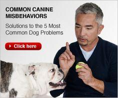 Dog Whisperer Cesar Millan | Dog Training DVDs, Books, Dog Supplies. Articles & Video Tutorials