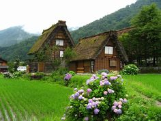 Shirakawa-go, a beautiful village in Japan Gokayama, Japanese Farmer, Shirakawa Go, Unusual Homes, Green Life, Japan Travel, Japan Trip, Places To Eat, Architecture