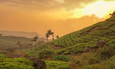 Check out this blog on why Kerala should be your top priority tourist places!!!!