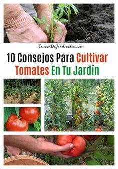 43 Ideas De Seed Cultivo De Plantas Jardín De Vegetales Jardineria Y Plantas