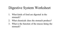 Digestive System Worksheet 1.What kinds of food are digested in the stomach? 2.What chemicals does the stomach produce? 3.What is the function of the mucus.