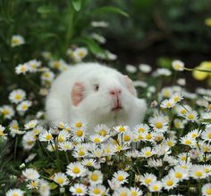 Ok....I'm a believer....animals - big and small, love daisies too!